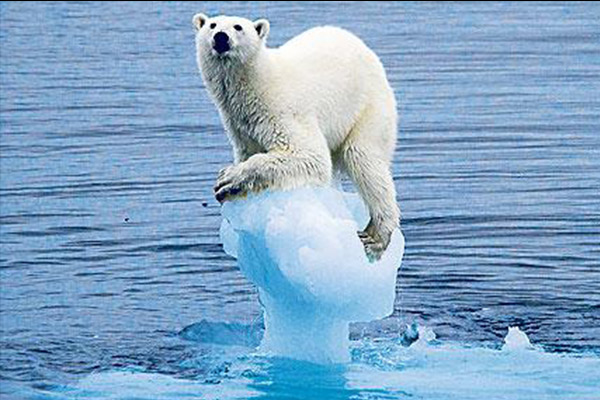 Climate Change not only affects Polar Bears, but us too. http://socialjournalism.com.au/wp-content/uploads/2013/06/climateChange.jpg